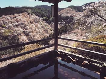 桜温泉3.jpg