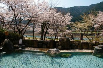 桜温泉5.jpg