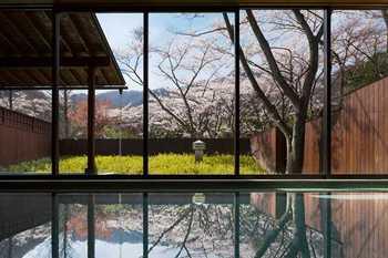 桜温泉4.jpg