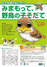 見守って野鳥の子育て.jpg
