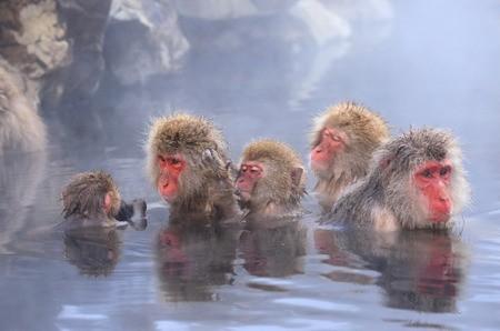 サル山温泉.jpg
